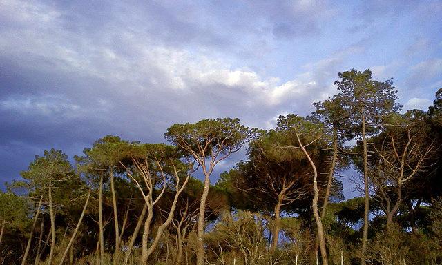 /Хвойные леса в окрестностях Пунта-Ала