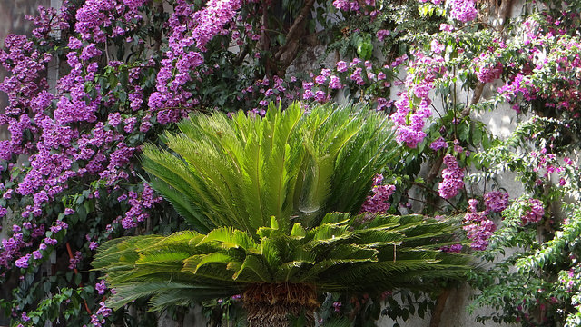 Сады Равелло
