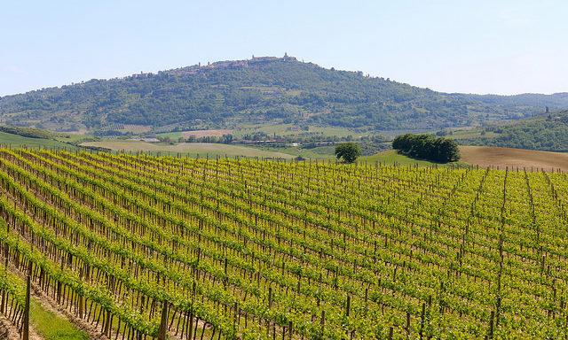 Виноградники в Монтальчино