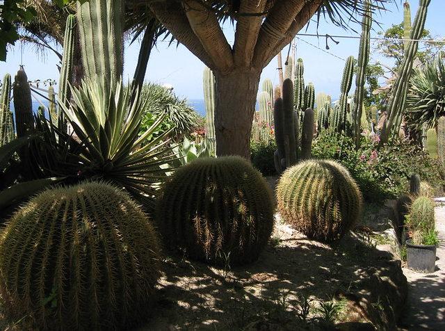 Ботанический сад на Искье